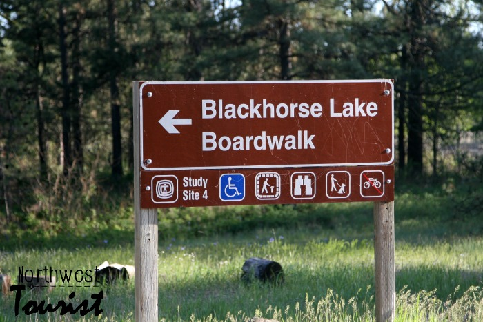 Blackhorse lake boardwalk