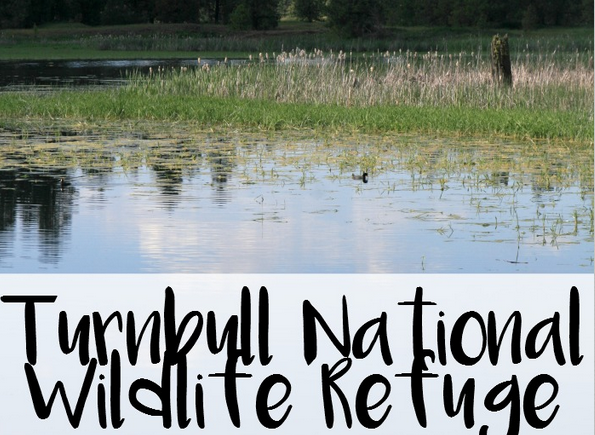 Turnbull Wildlife Refuge- This national park is full of fun hiking trails for kids and is also a wheelchair friendly park in eastern Washington state.