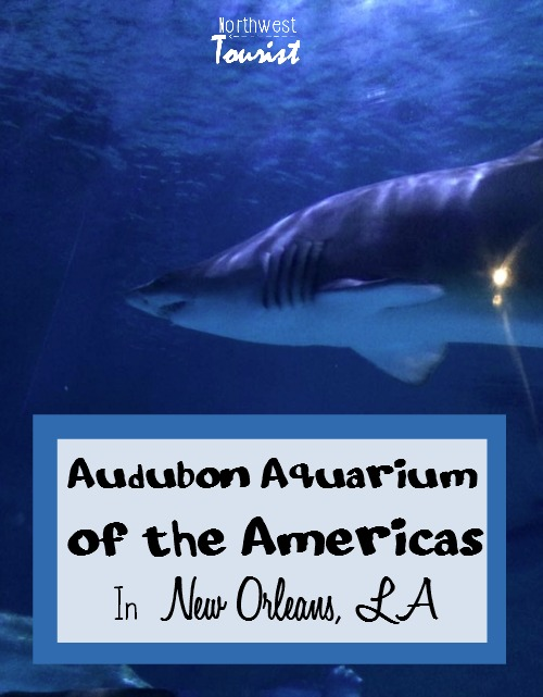 audubon-aquarium-of-the-americas-in-new-orleans